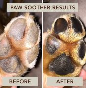 zolly natural dog company paw soother