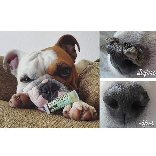 zolly natural dog company snout soother