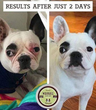 zolly natural dog company wrinkle balm