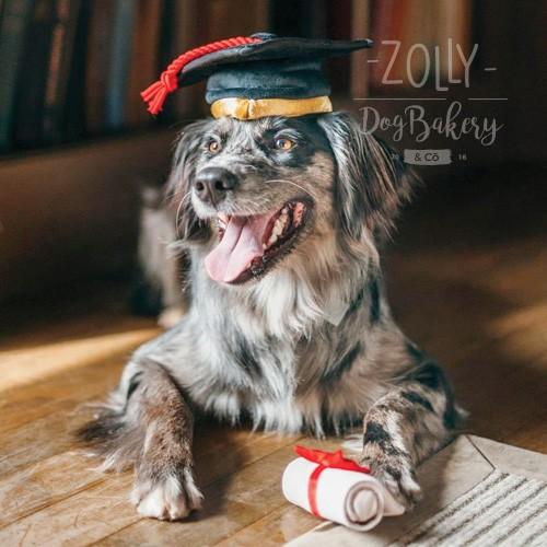 zolly petplay hracky pro psy zpet do skoly