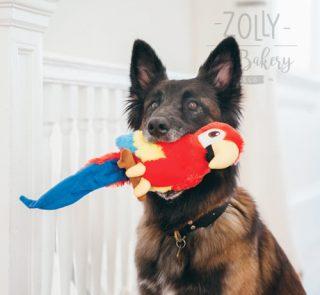zolly-petplay-hracky-pro-psy-papousek-03