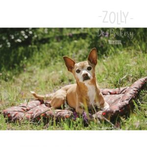 zolly petplay outdoor chill pad podložka