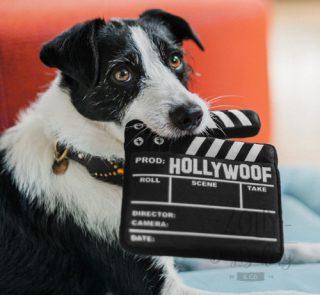 zolly hracky pro psy petplay filmova klapka